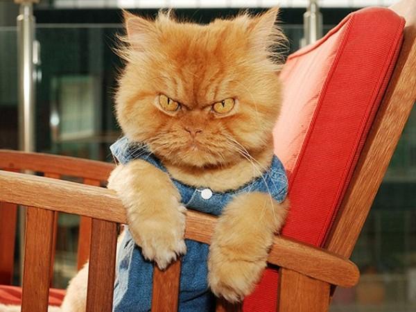 قطة مغربية تقتل سائحا بريطانيا